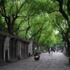 Ancient Town Trees Park Avenue  - wbuz010 / Pixabay