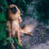 Animal Attention Bark Big Bitch  - igorovsyannykov / Pixabay
