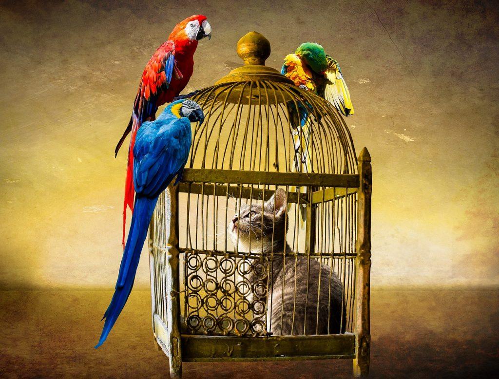 Animals Cat Bird Parrot Ara Cage  - blende12 / Pixabay