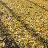 Autumn Landscape The Leaves Leaves  - eundi3927 / Pixabay