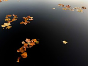 Autumn Leaves On Water Fall  - PozitiveDezign / Pixabay