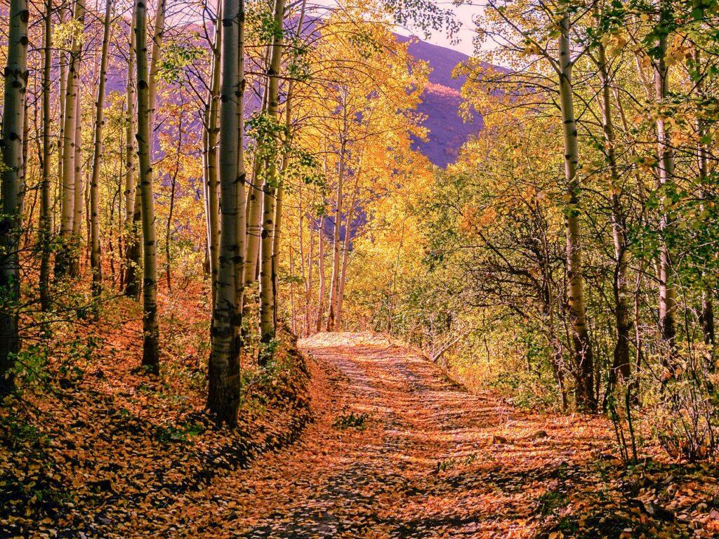 Autumn Season Nature Beautiful  - kareni / Pixabay