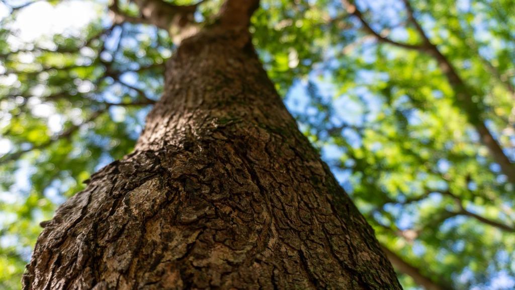 Big Tree Park Tree Bark Trunk  - lisbethfelix / Pixabay