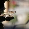 Bird Food Bird Feeder Perched  - schauhi / Pixabay
