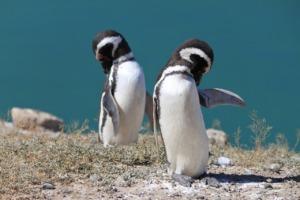 Bird Penguins Ornithology Animal  - JFHoffmann_Photo / Pixabay