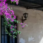 Blossom Bloom Hauswand Colonia  - thegermankid / Pixabay