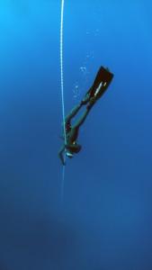Blue Deep Diving Deep Ocean Dive  - Pexels / Pixabay
