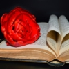 Book Bible Heart Pages Red Tulip  - neelam279 / Pixabay