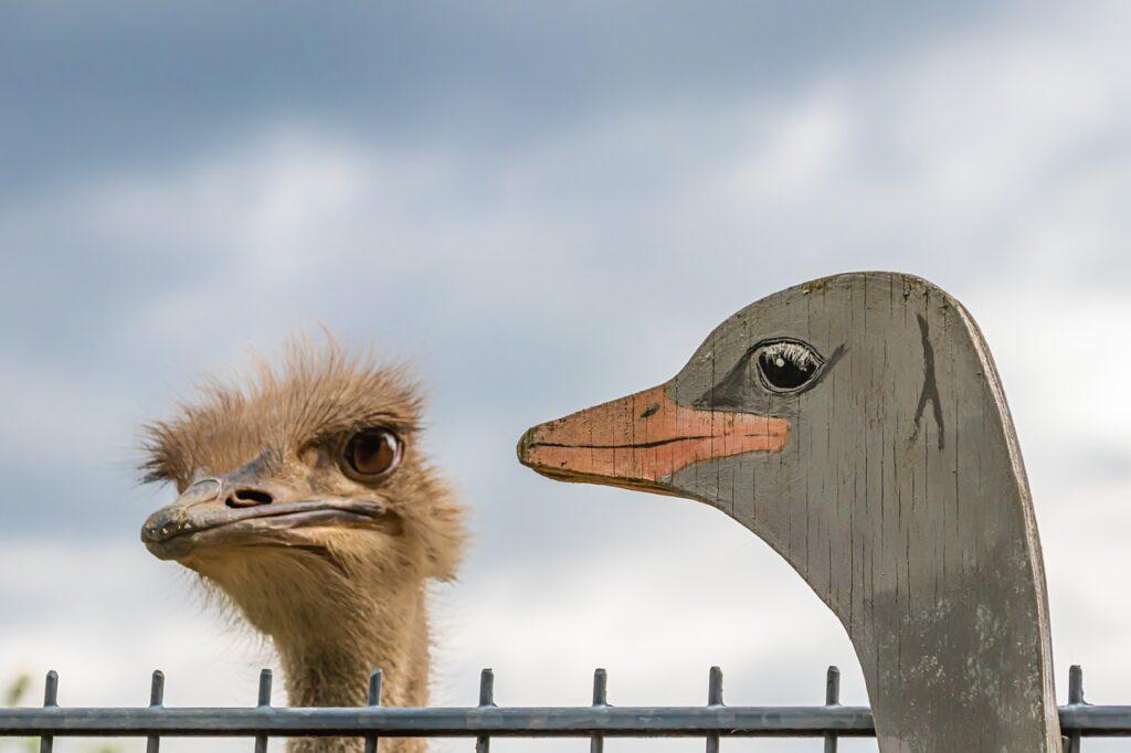 Bouquet Animal Bird Nature Sky  - analogicus / Pixabay