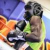 Boxer Boxing Man Fighter Headgear  - AhoPai / Pixabay