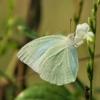 Butterfly Flower Pollinate  - ignartonosbg / Pixabay