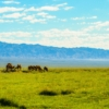 Camels Field Mountains Grazing  - MBViSign / Pixabay