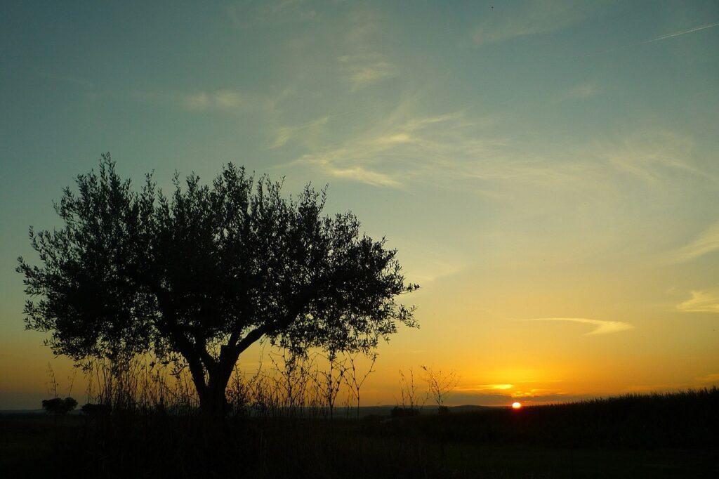 Campomayor Alentejo Portugal Olive  - Paco / Pixabay