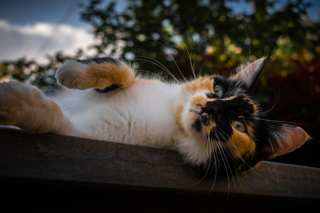 Cat Cute Animal Fart Animals  - loicp90 / Pixabay