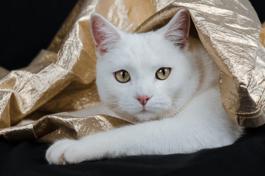 Cat Feline Whiskers Gold Kitty  - miezekieze / Pixabay