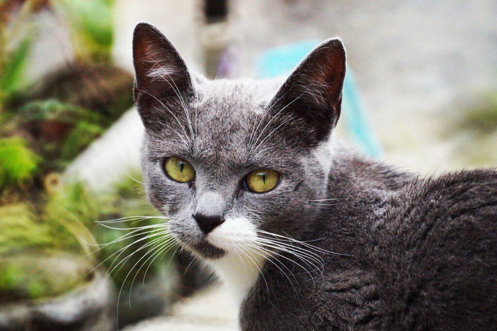 Cat Feline Whiskers Pet Domestic  - TRAPHITHO / Pixabay