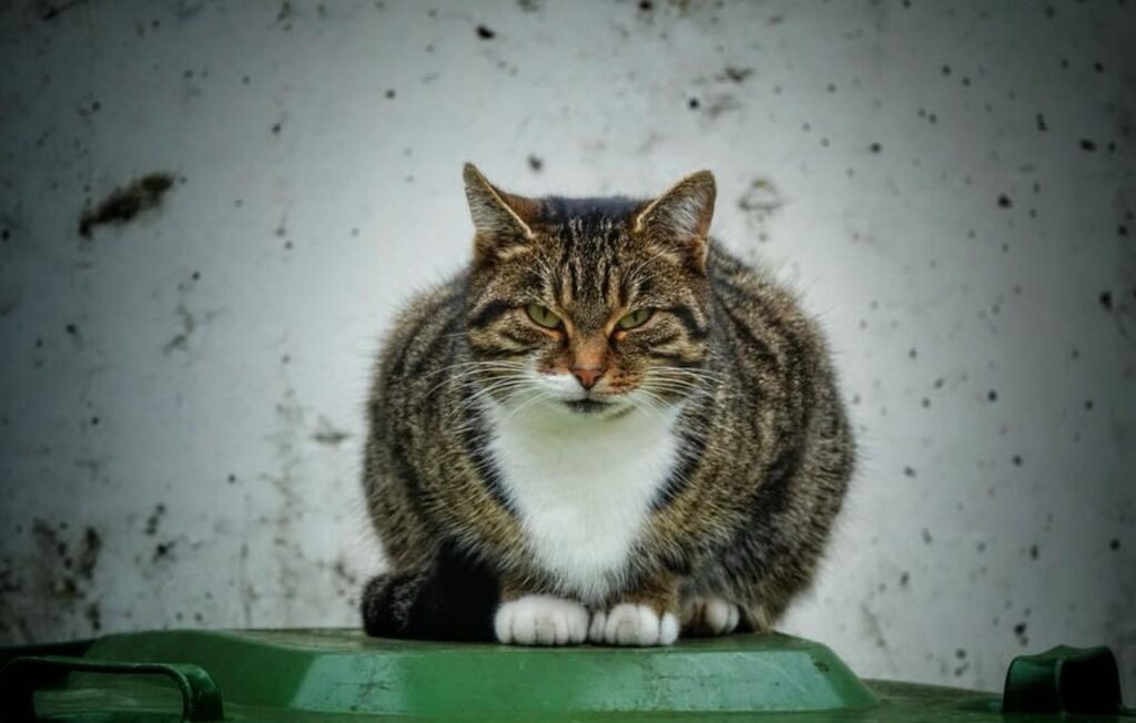 Cat Garbage Can Guard Defend  - WagnerAnne / Pixabay