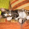 Cat Kitten Animal Lying Down  - carlosrafaelcastrocast / Pixabay