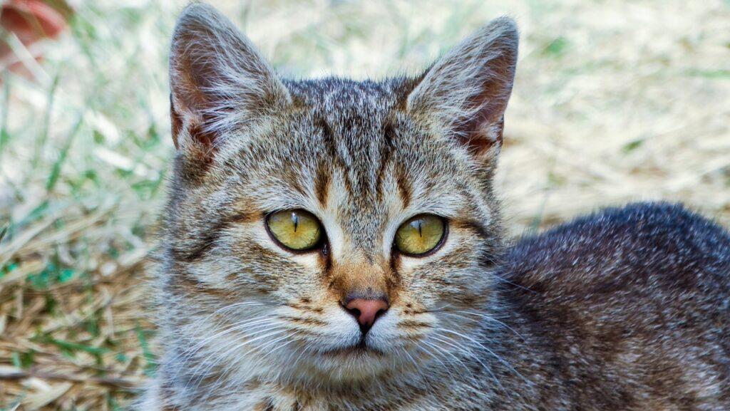 Cat Kitten Animals Cat S Eyes Cute  - johannaschendel / Pixabay
