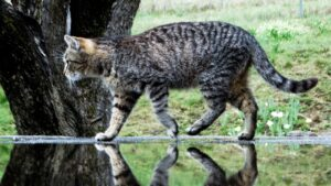 Cat Kitten Animals Domestic Cat  - johannaschendel / Pixabay