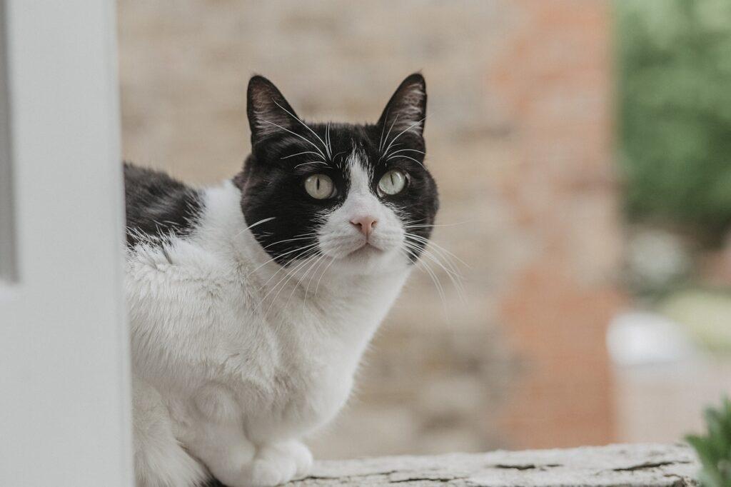 Cat Kitten Feline Cute Animal  - eduardovieiraphoto / Pixabay