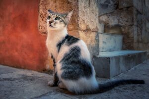 Cat Kitten Feline Pet Kitty  - fietzfotos / Pixabay