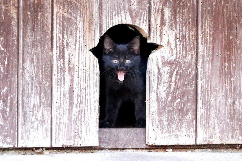 Cat Kitten Pet Cat S Eyes Curious  - WFranz / Pixabay