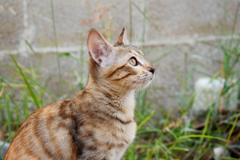 Cat Kitten Pet Tabby Young Cat  - Astridsu / Pixabay