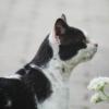 Cat Pet Feline Animal Fur  - TanteTati / Pixabay