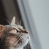 Cat Pet Feline Animal Fur Kitty  - PHOTIKUS / Pixabay