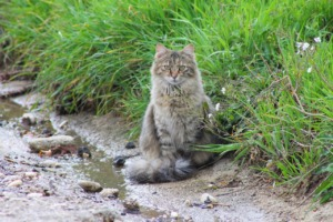 Cat Pet Feline Animal Fur Kitty  - semprepiusu03 / Pixabay
