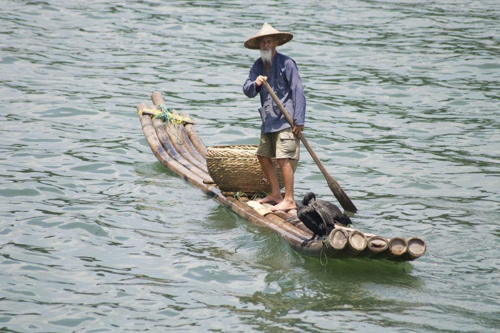 China Cormorant Lijiang River  - BrettMillward / Pixabay
