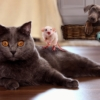 Comedy Animals Pets Dog Cat Mouse  - ParallelVision / Pixabay