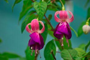 Costa Rica Plant Flower Flowering  - mfuente / Pixabay