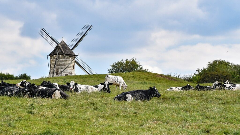 Cows Cattle Mill Windmill  - christels / Pixabay