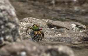 Crab Crustacean Sea Marine Animal  - Erik_Karits / Pixabay
