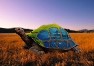 Creative Editing Turtles Mountains  - Naveen32 / Pixabay