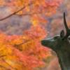 Deer Autumnal Leaves Maple Red  - ara0w0ara / Pixabay