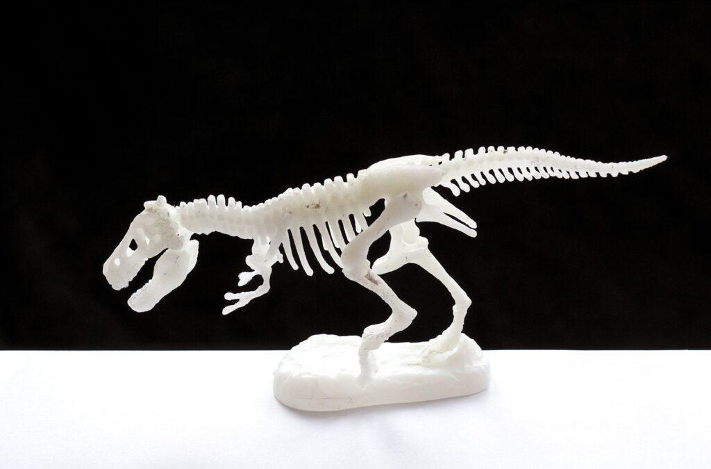 Dinosaur Skeleton Fossil Bones  - ks77 / Pixabay