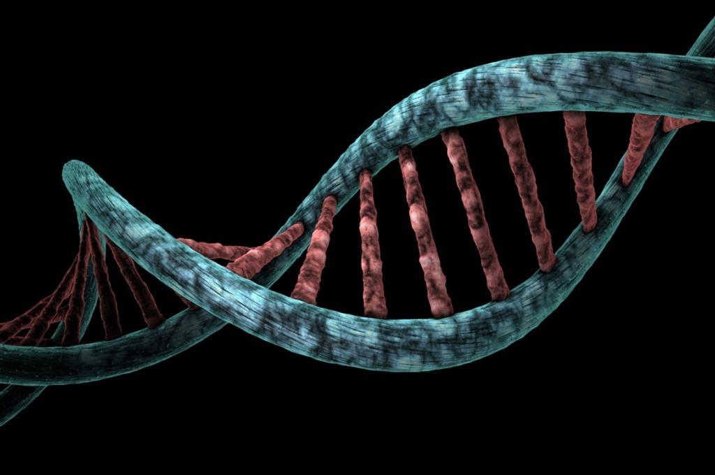 Dna Analysis Genetic Biological  - mirerek8 / Pixabay
