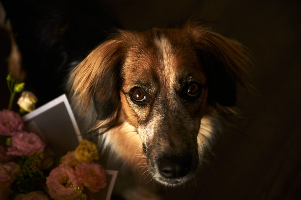 Dog Canine Pet Domestic Companion  - konstantance / Pixabay
