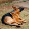 Dog Friend Pet Friendship Animal  - imsogabriel / Pixabay