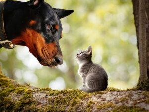 Dog Kitten Animals Pets Cat  - flutie8211 / Pixabay