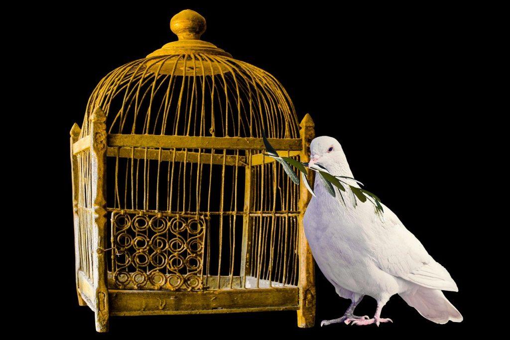Dove Bird Animal White Dove  - blende12 / Pixabay