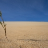 Drought Climate Change Ecology  - Wolfgang_Hasselmann / Pixabay
