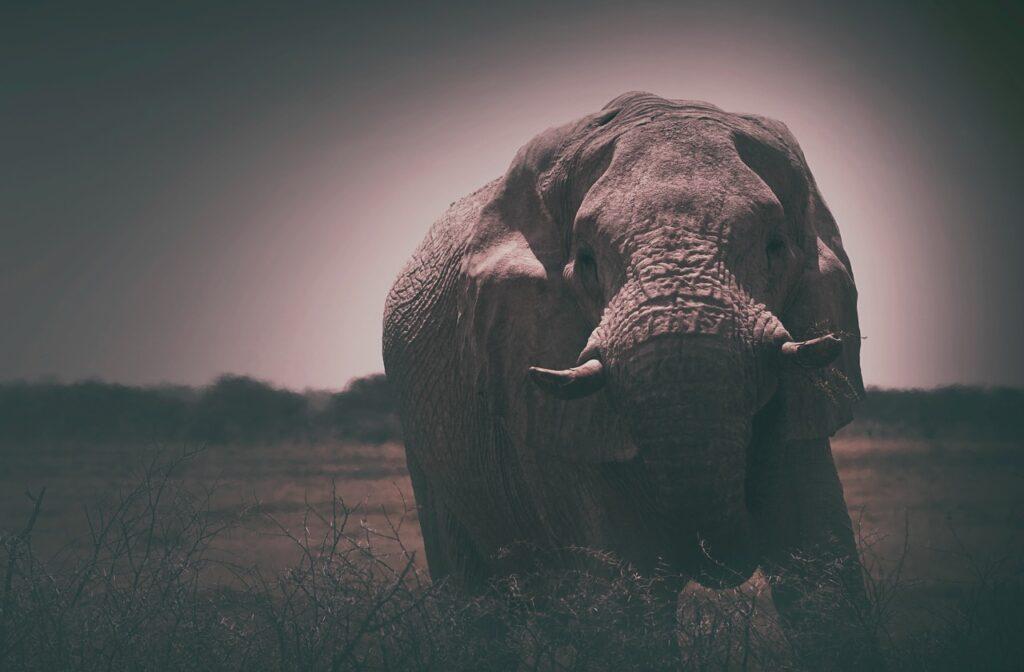 Elephant Animal Mammoth Mammoth  - StockSnap / Pixabay