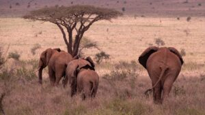 Elephants Herd Safari Animals  - hbieser / Pixabay