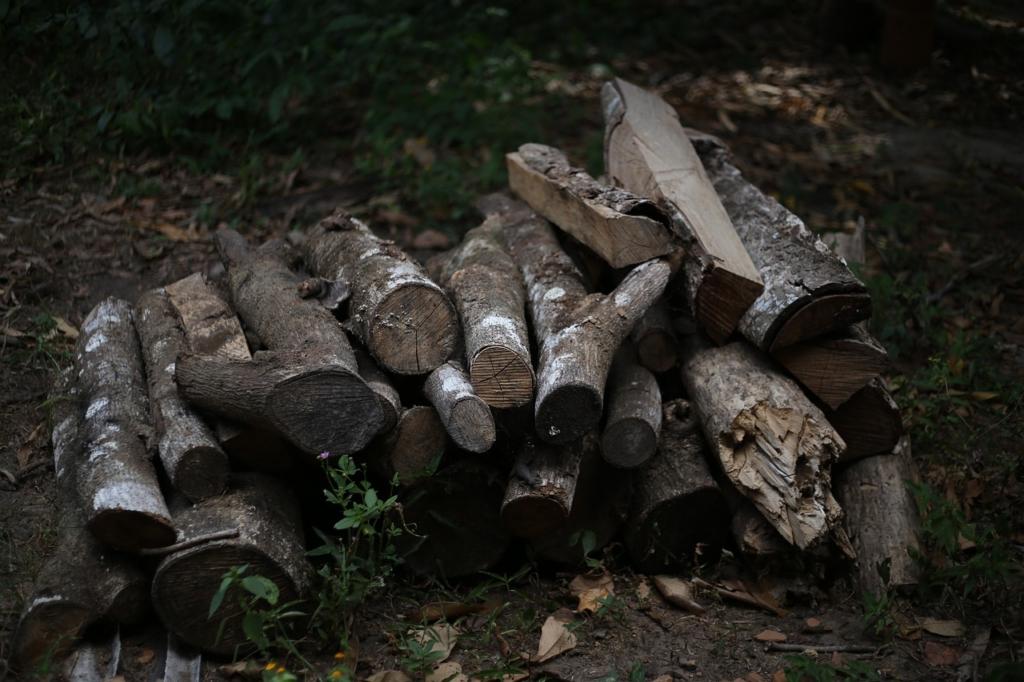 Firewood Wood Coal The Forest  - aurocunha / Pixabay