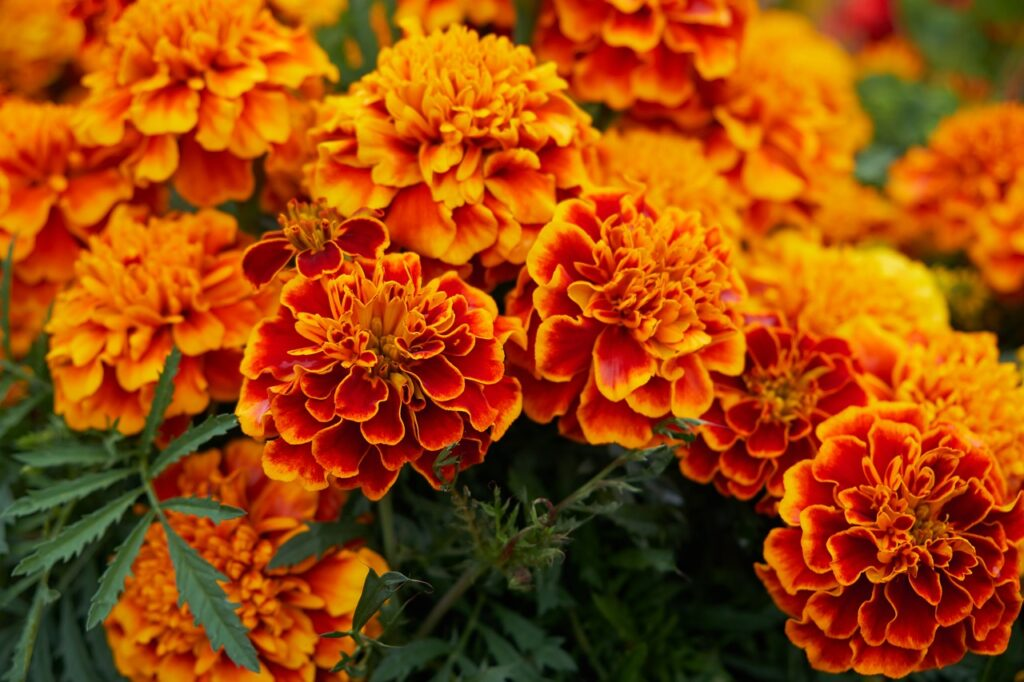Flower Blossom Bloom Yellow Orange  - Bru-nO / Pixabay