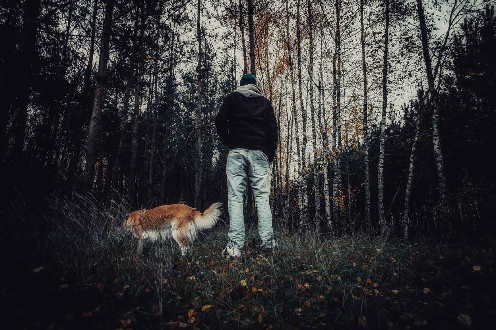 Forest Creepy Horror Movie Video  - jwvein / Pixabay